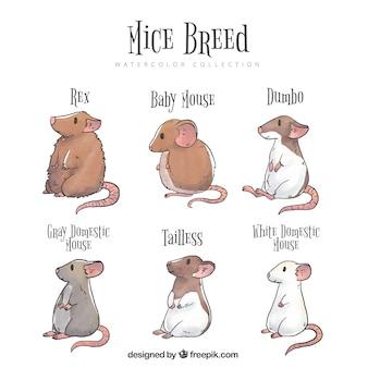 6匹のマウスが繁殖する