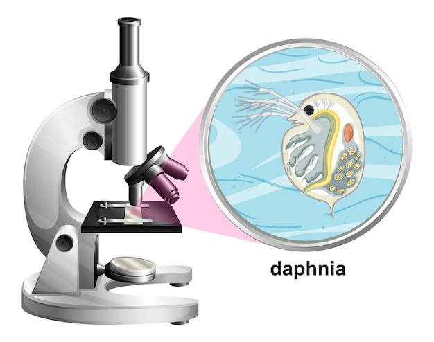 白い背景の上のミジンコの解剖学的構造を持つ顕微鏡