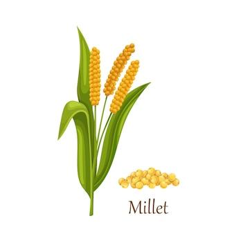 Millet grass cereal crops or grains, agricultural plant illustration