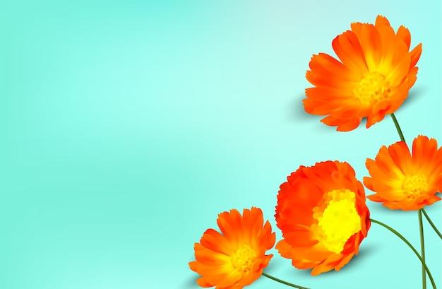 キンセンカの花と最小限の背景