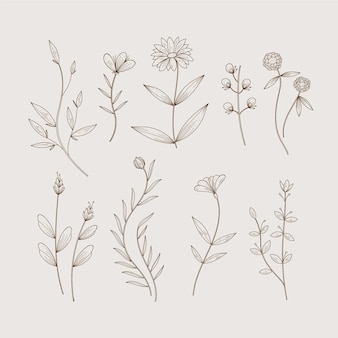 Minimalist botanic herbs and wild flowers in vintage style