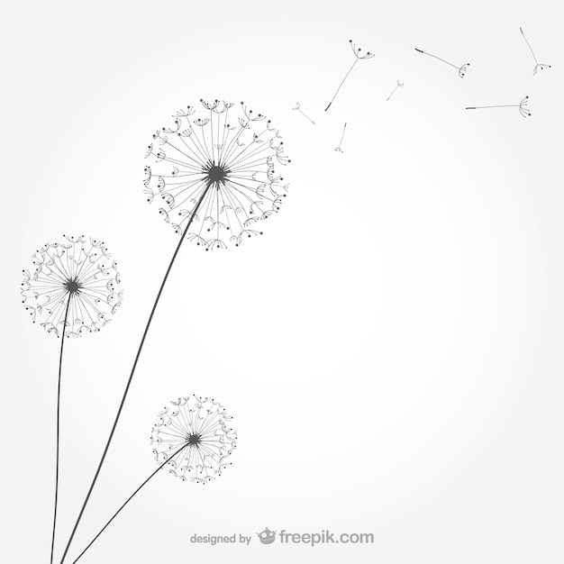 dandelion vectors photos and psd files free download rh freepik com dandelion vector png dandelion vector png