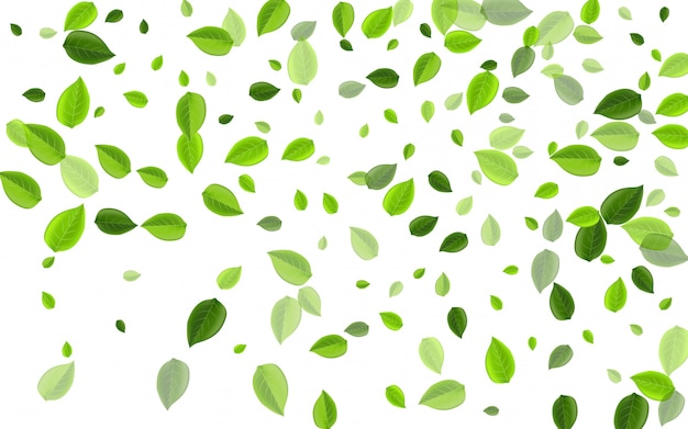 Mint leaf forest vector concept. spring foliage