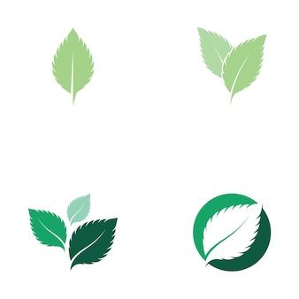 Листья мяты свежая природа логотип вектор Premium векторы