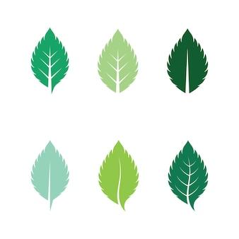 Листья мяты свежая природа логотип вектор