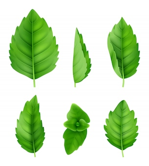 ミントの葉は現実的です。クローズアップスペアミント自然ハーブ新鮮な香りの緑の写真