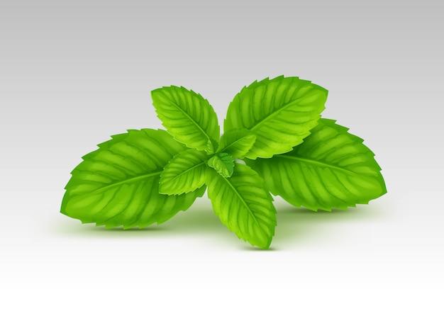 ミントスペアミントペパーミントの葉の葉の白い背景のセット
