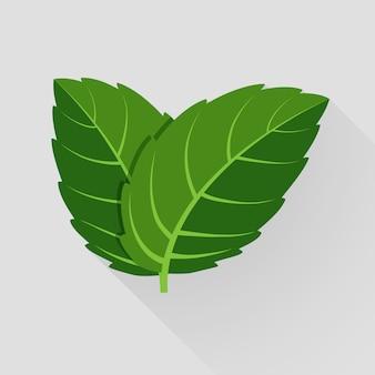 민트 벡터 나뭇잎. 식물 박하, 녹색 잎 박하, 유기 및 신선한 박하 그림