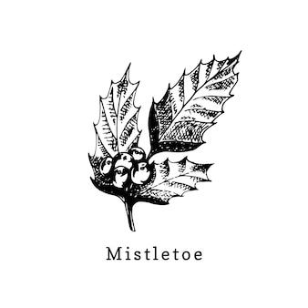 Mistletoe branch, hand drawn illustration on white background. vector christmas design.