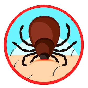 Mite bites a person's body close-up. warning sign