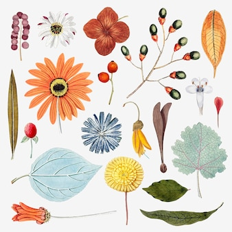 Mixed flowers and leaves set vector