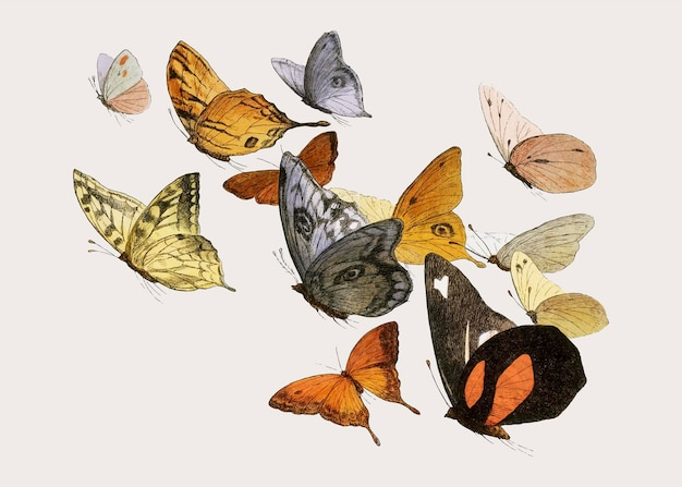 Mixed flying butterflies vintage illustration