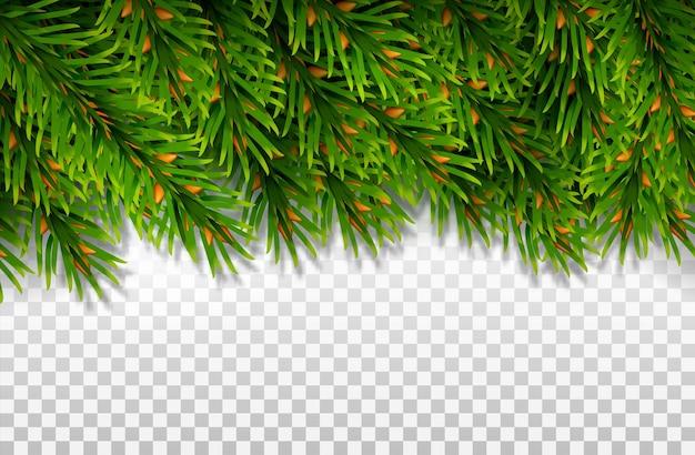 Макет баннера из вечнозеленых еловых веток. для рождественских украшений и дизайна поздравительных открыток.