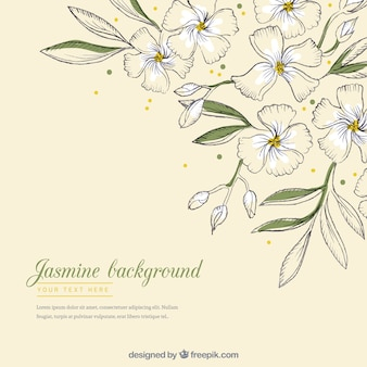 Modern background with hand drawn jasmine