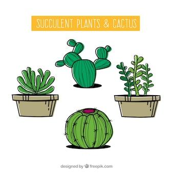 Modern cactus collection