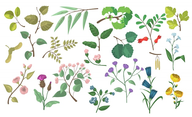 Modern floral and botanical flat vector elements