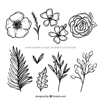 Modern floral elements with hand drawn style