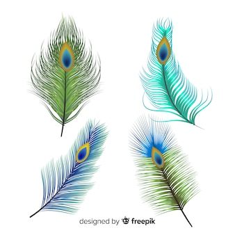 Modern hand drawn peacock feather collection