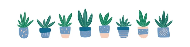 Modern home decor with handdrawn house plant succulent