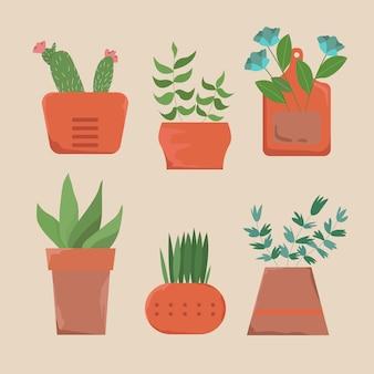 Modern minimalist green plant on ceramics pot