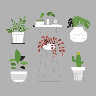 Modern minimalist green plant on white pot
