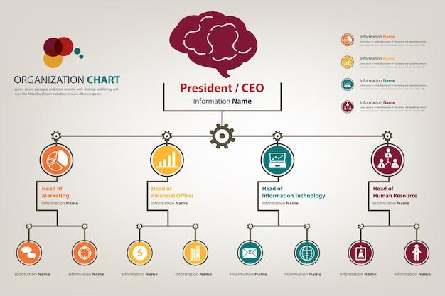 Modern organization chart in vector style