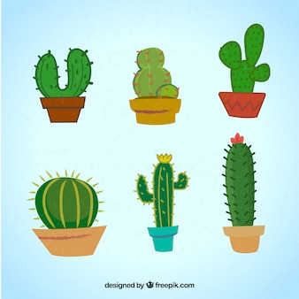 Modern pack of colorful cactus
