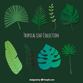 Modern set of hand drawn tropical leaves