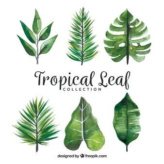 Modern set of watercolor tropical leaves