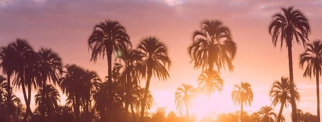 Современная простая летняя обложка профиля в фейсбуке с пальмами Бесплатные векторы