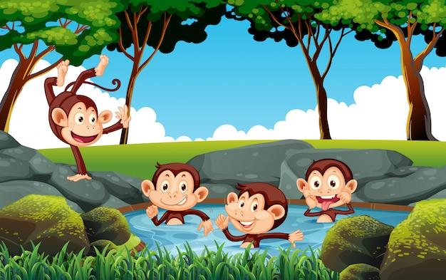 Mokey playing in water