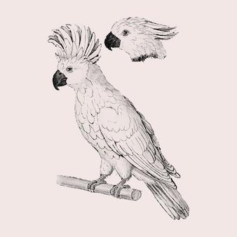 Moluccan cockatoo vintage style