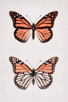 Monarch butterfly vintage wall art print poster design remix from original artwork by sherman f. denton.