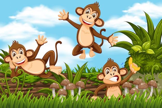Monekys in jungle