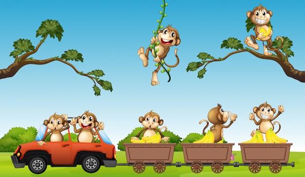Monkey family on the car