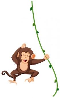A monkey hanging on vine
