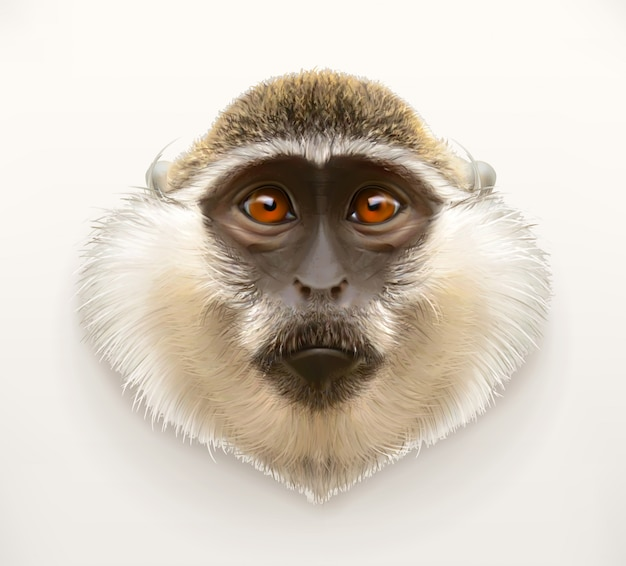 Monkey head, realistic  illustration