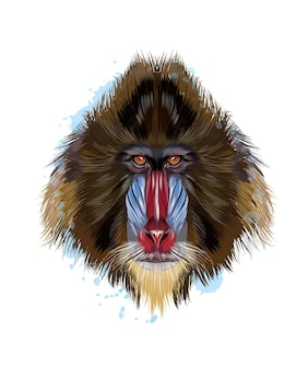 Monkey mandrill head portrait from a splash of watercolor, colored drawing, realistic.
