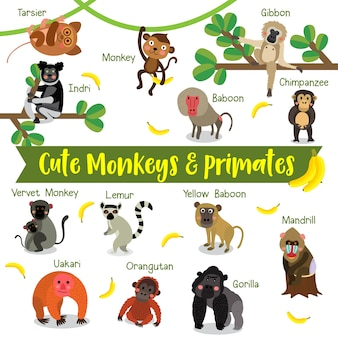 Monkey and primate cartoon with animal name