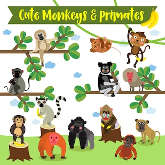 Monkey and primate cartoon