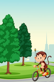 Monkey riding bicycle in the park