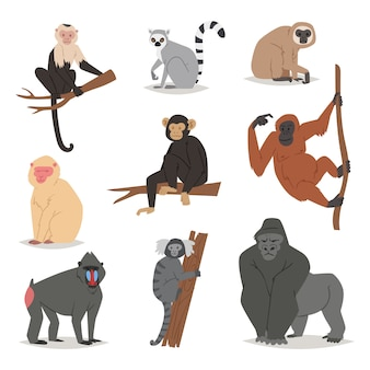 Обезьяна набор милые животные макаки обезьяны мультипликационный персонаж примат обезьян шимпанзе, гиббонов и баббонов иллюстрации на белом