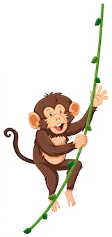 Monkey on vine white background