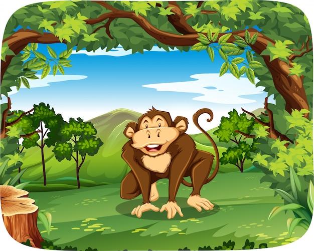 A monkey in wild forest