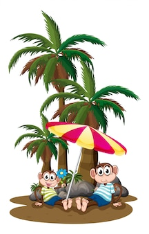 Monkeys under the coconut trees