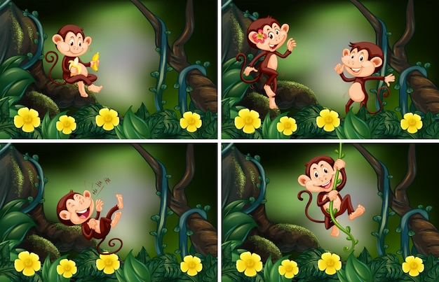 Monkeys living in the forest