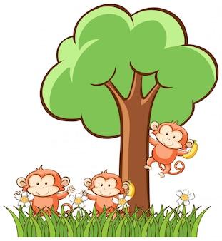 Monkeys on white background
