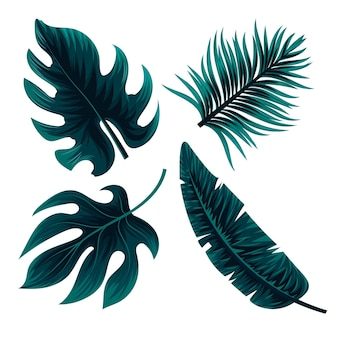 Concetto di foglie tropicali monocromatiche