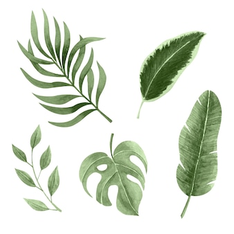 단색 열대 나뭇잎