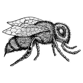 Icona animale monocromatica con immagine dell'ape disegnata a mano su bianco illustrazione
